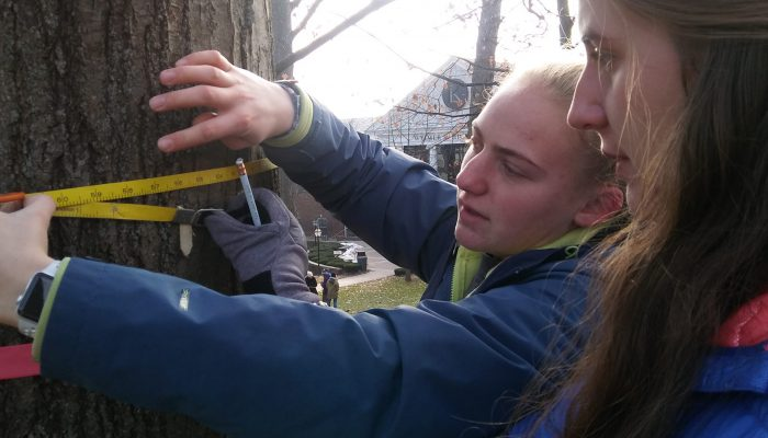 Environmental studies students measure trees on the quad